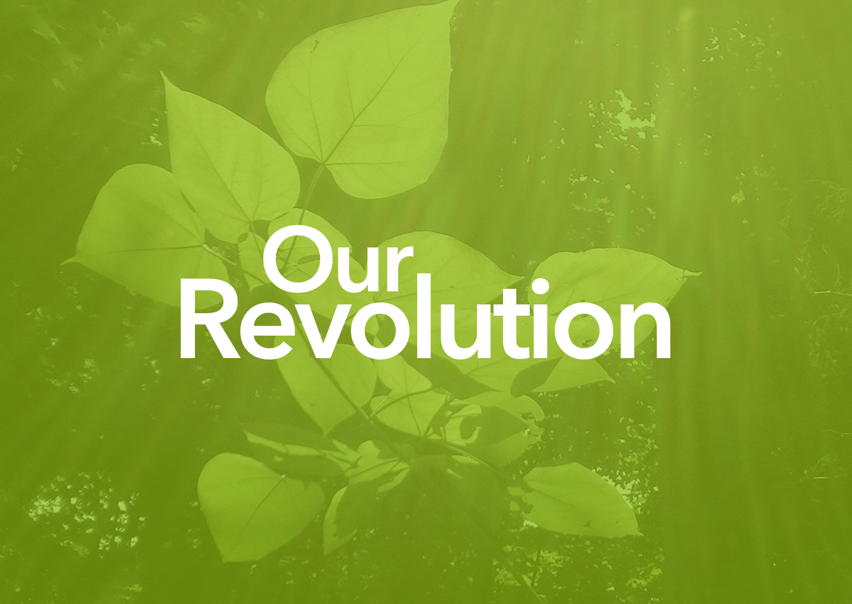 ourrevolution